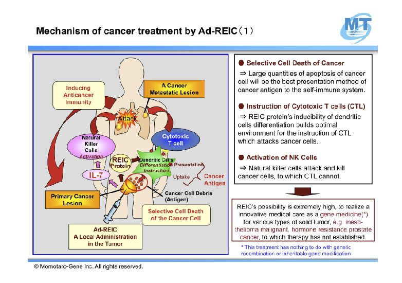 Mechanism of cancer treatment by Ad-REIC 1
