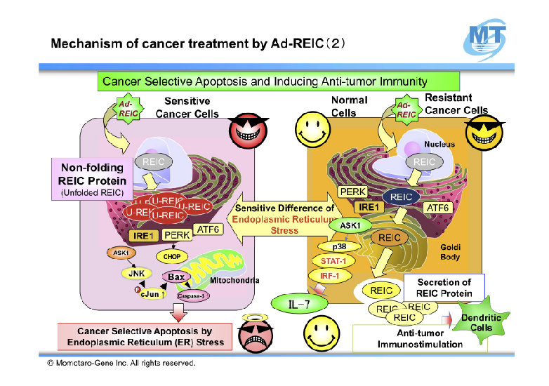 Mechanism of cancer treatment by Ad-REIC 2