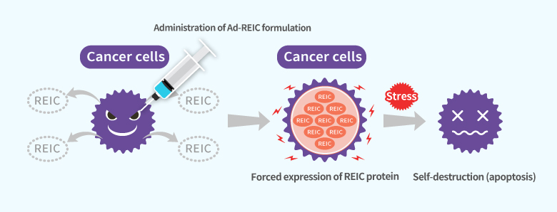 Mechanism of apoptosis of cancer cells by Ad-REIC formulation